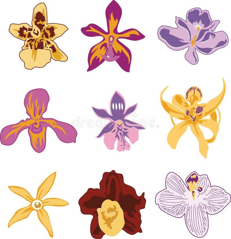Download Orchidee-Blumen vektor abbildung. Illustration von purpurrot - 27730274