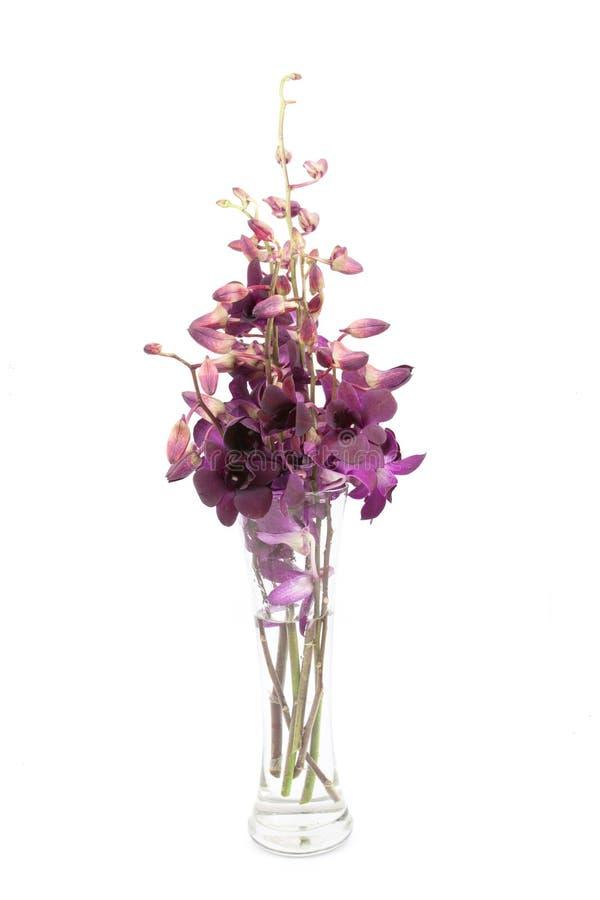 Orchidee in de vaas over stock afbeelding