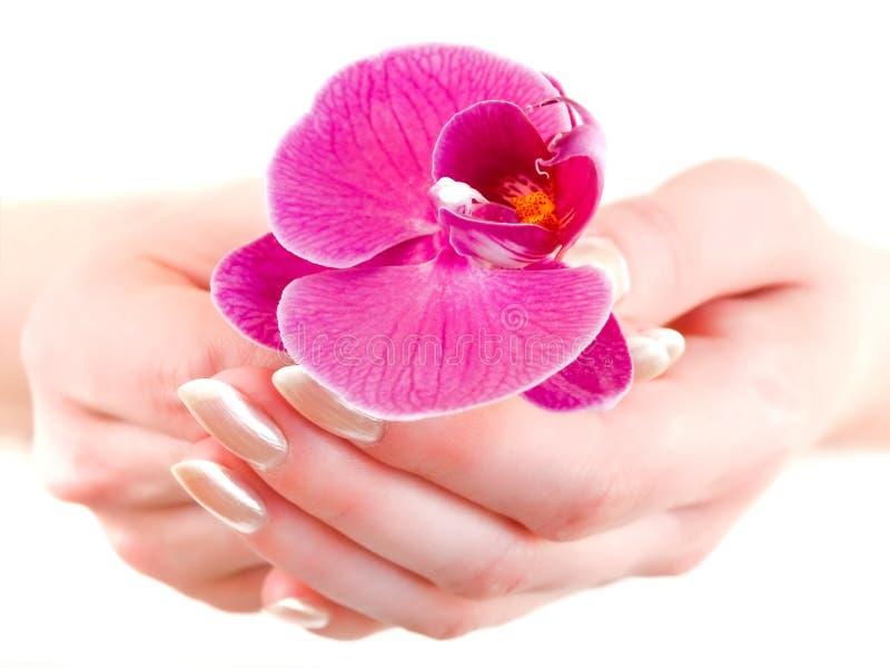 Orchidee in den Frauenhänden lizenzfreie stockbilder