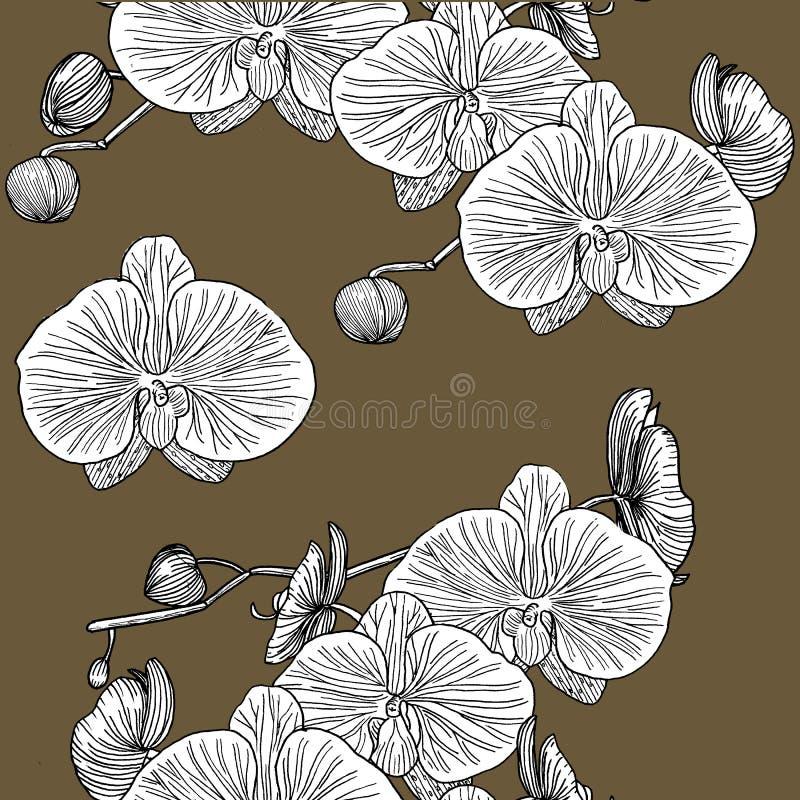 orchidee deseniują bezszwowego ręka patroszona royalty ilustracja