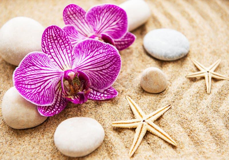 Orchidee e pietre fotografia stock libera da diritti
