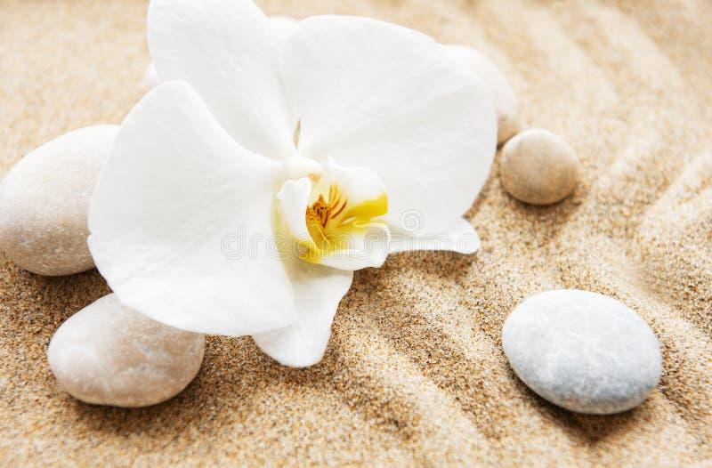 Orchidee e pietre immagini stock libere da diritti