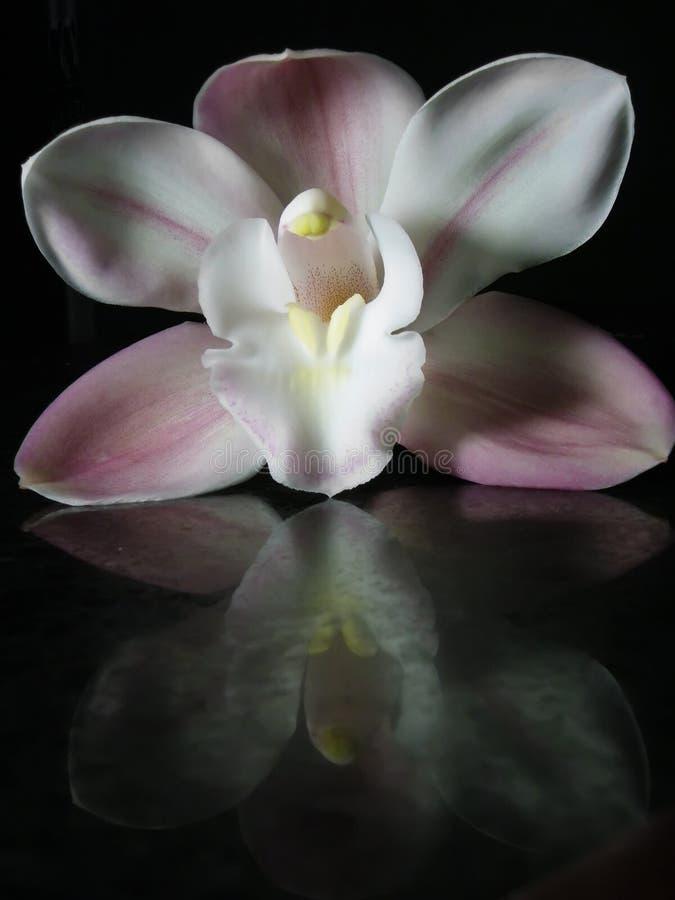 Orchidee en Bezinning stock foto