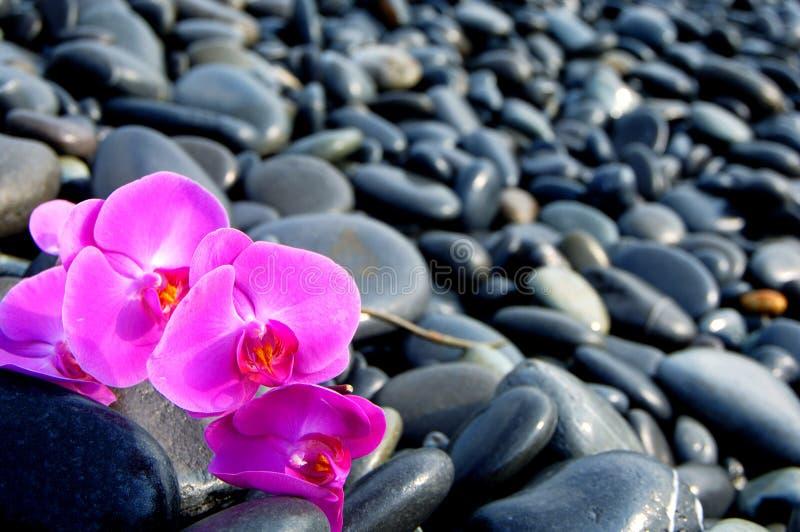 Orchidee en steen royalty-vrije stock foto