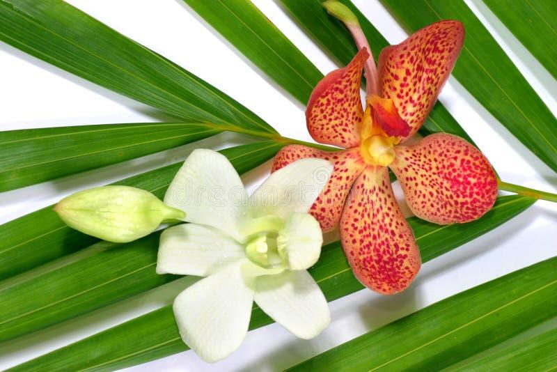 Orchidee fresche fotografia stock