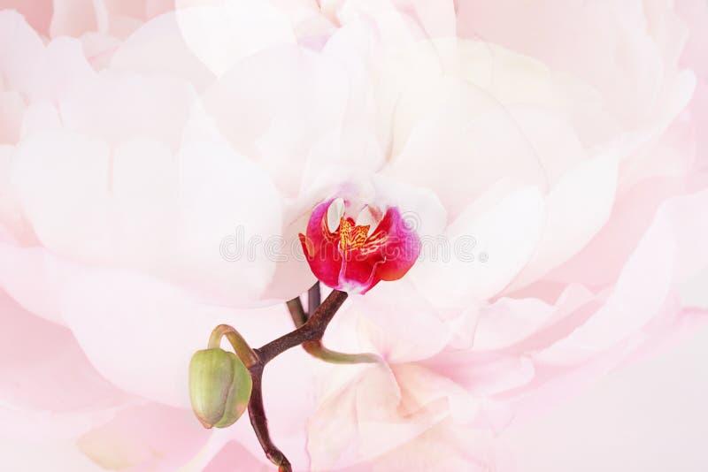 Orchidee geweven samenvatting royalty-vrije stock afbeeldingen