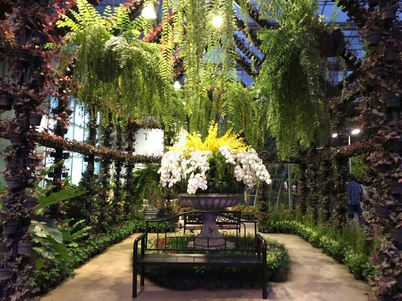 Orchidee i paprocie w ogrodzie z krzesłem zdjęcia royalty free