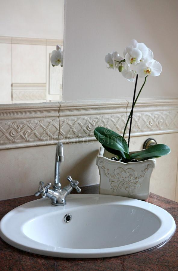 Download Orchidee Im Badezimmer Stockfoto. Bild Von Aktivität   40754894