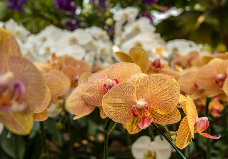 Orchidee im Garten lizenzfreies stockbild