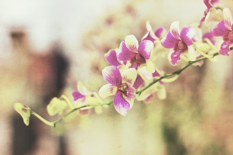 Orchidee op grunge oud document stock afbeelding