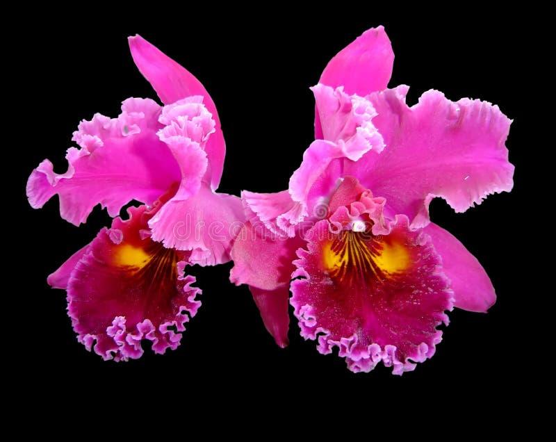 Orchidee op zwarte stock foto's