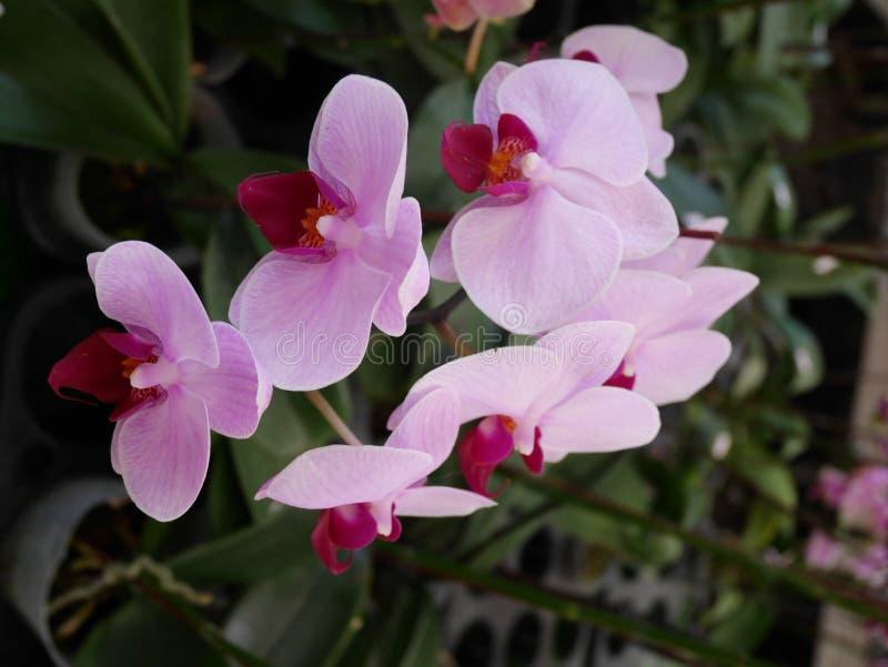 Orchidee, orchideeën, bloem, wit, de mooie lente, bloemen, aard, flora, groene bloei, achtergrond, ontwerp, tuin, landbouwbedrijf stock foto