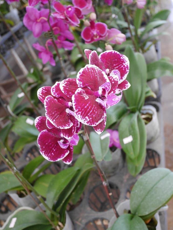 Orchidee, orchideeën, bloem, wit, de mooie lente, bloemen, aard, flora, groene bloei, achtergrond, ontwerp, tuin, landbouwbedrijf royalty-vrije stock afbeeldingen