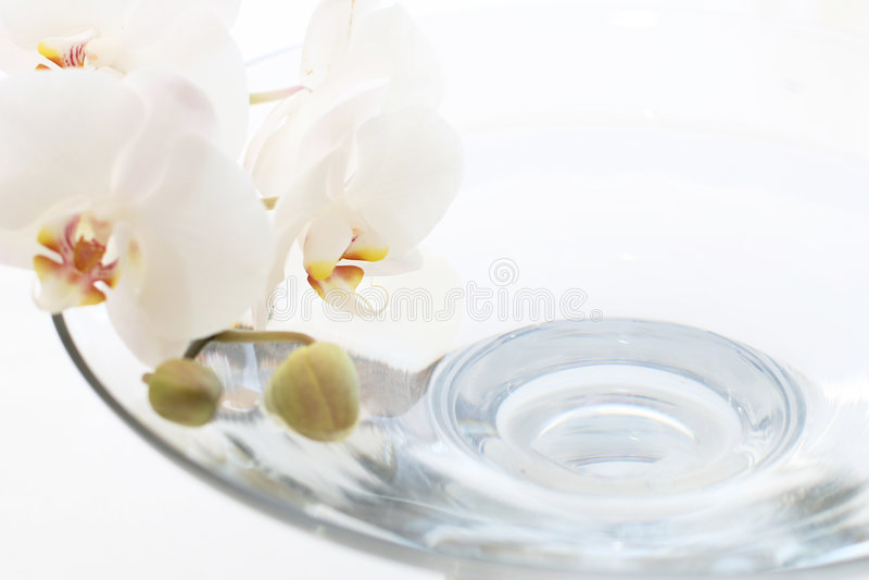 Orchidee over blauw water royalty-vrije stock foto