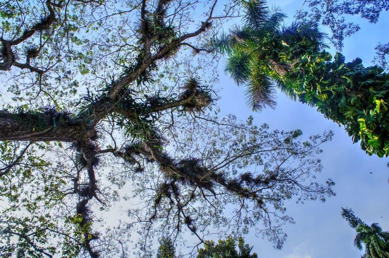 Orchidee pflanzt das Wachsen auf Baumasten stockfotos