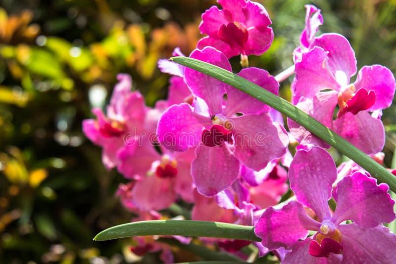 Orchidee po środku dżungli zdjęcie royalty free