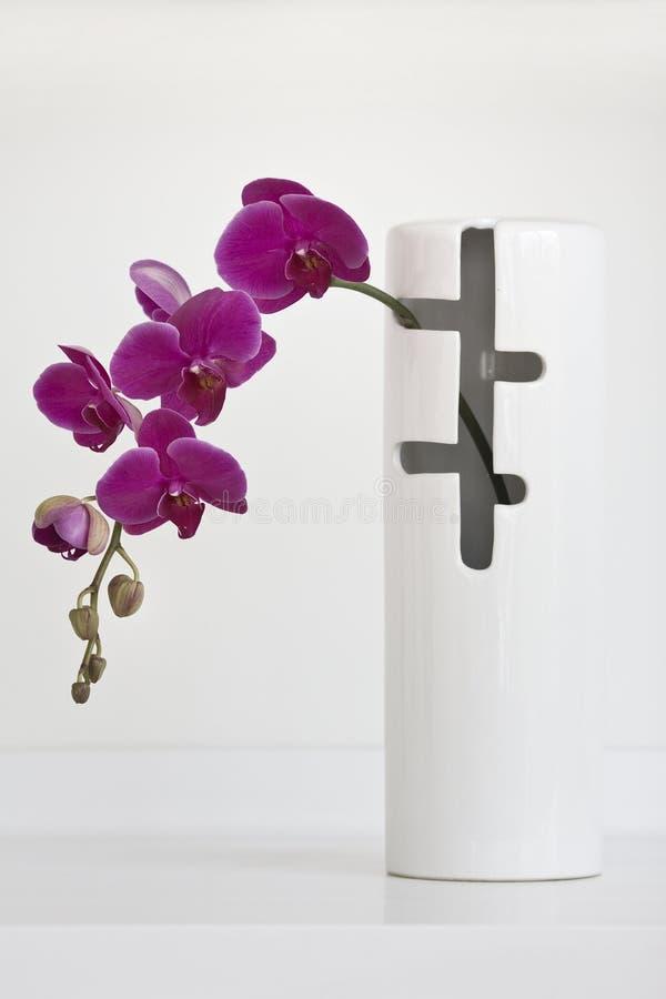 orchidee różowią wazowego biel obrazy stock