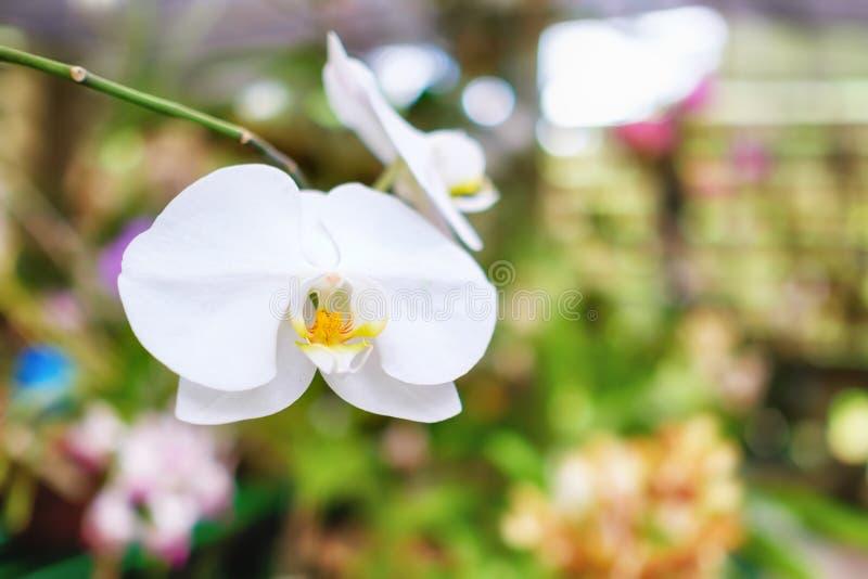 Orchideen Kopf orchidee am soroa orchideen botanischen garten in kuba stockfoto