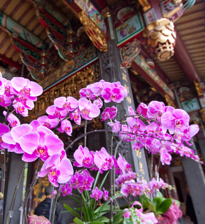 Orchidee in un tempiale Taiwan fotografie stock libere da diritti