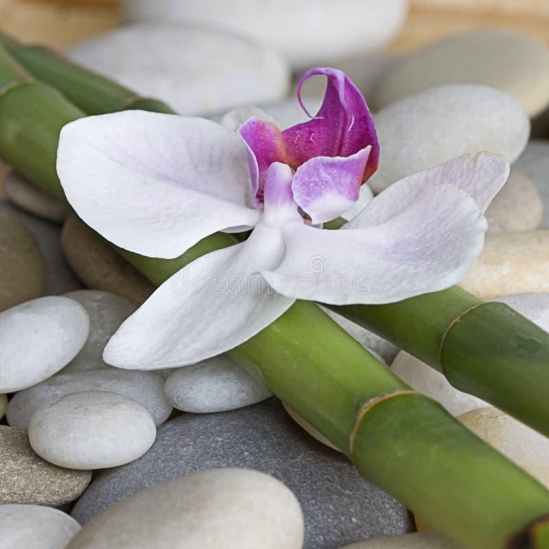Orchidee und Bambus lizenzfreie stockfotografie