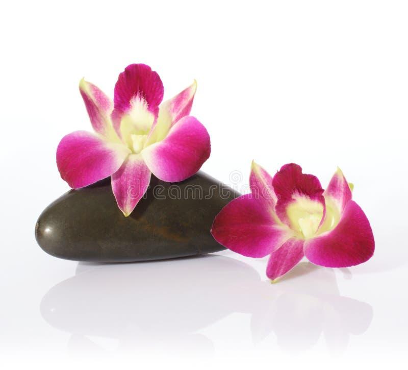 Orchidee-und Fluss-Steine lizenzfreie stockfotos