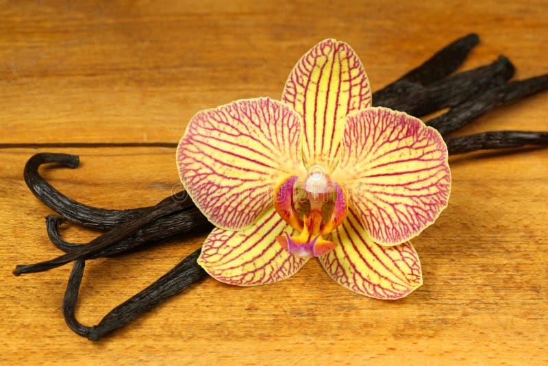 Orchidee- und Vanillehülsen stockfoto