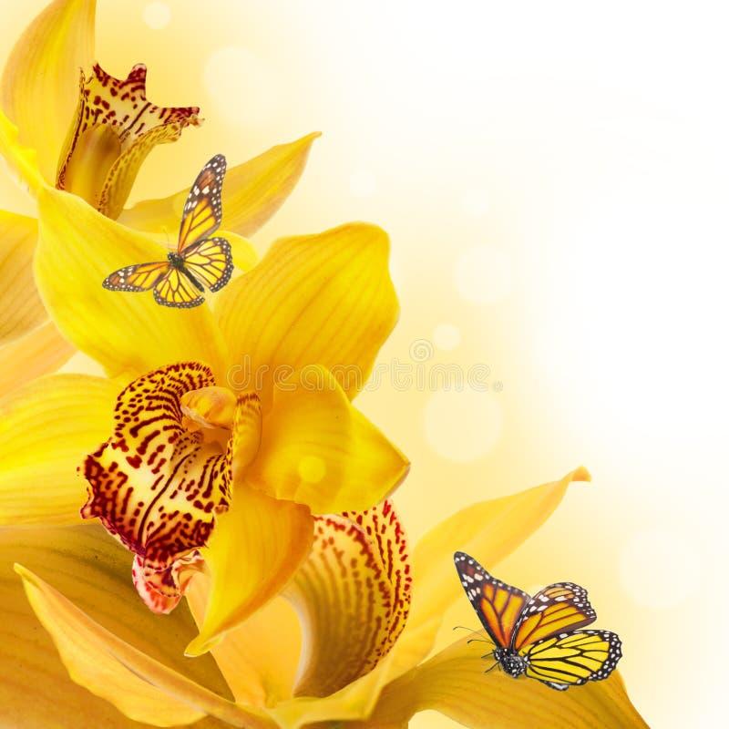 Download Orchidee w kroplach ilustracji. Ilustracja złożonej z miękkość - 28972974