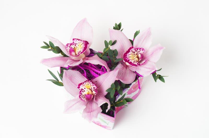 Orchidee w prezenta pudełku fotografia royalty free