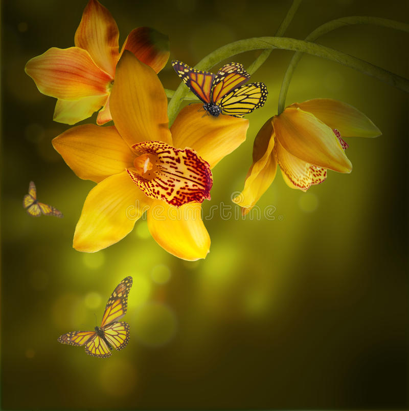 Download Orchidee z motylem ilustracji. Ilustracja złożonej z motyl - 28973036