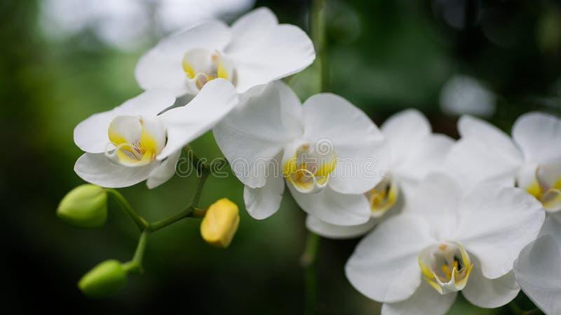 Orchidee zamykają w górę/miękki eteryczny odczucie obraz stock