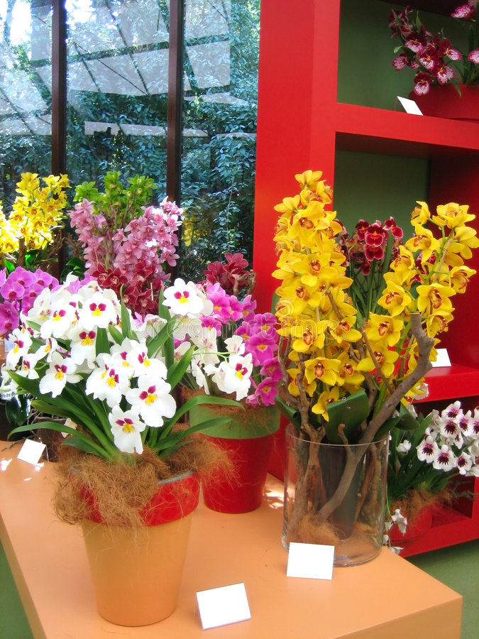 Orchideeanlagen stockfotos