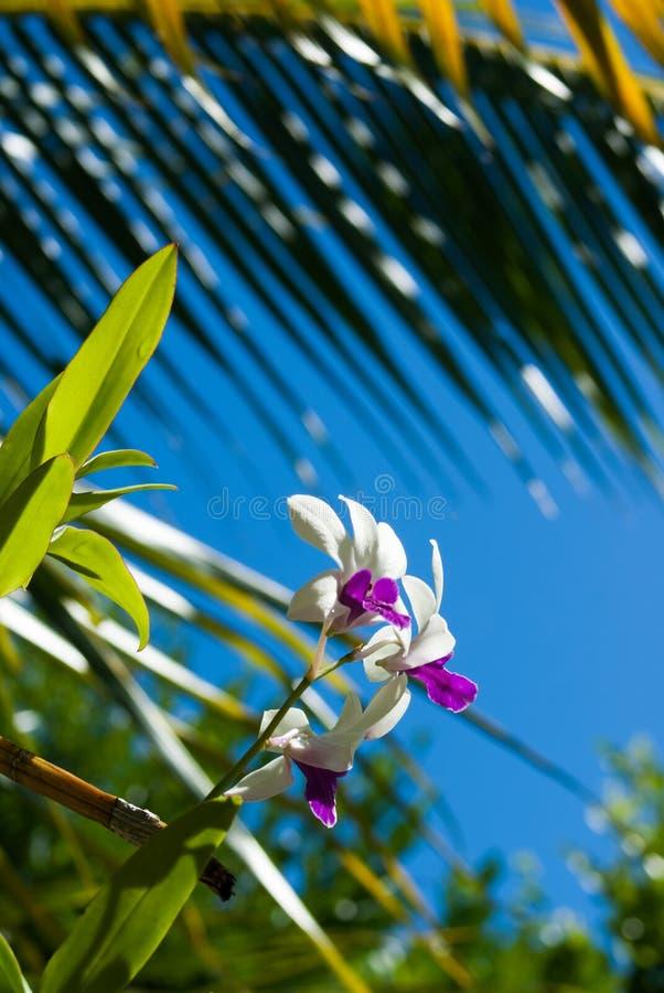 Orchideebloem royalty-vrije stock afbeelding