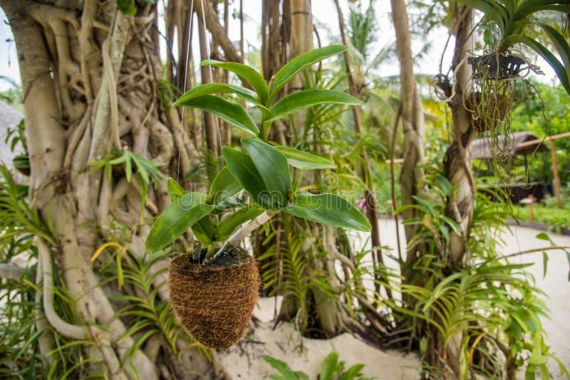 Orchideebloem in bijlage aan de boom stock afbeeldingen
