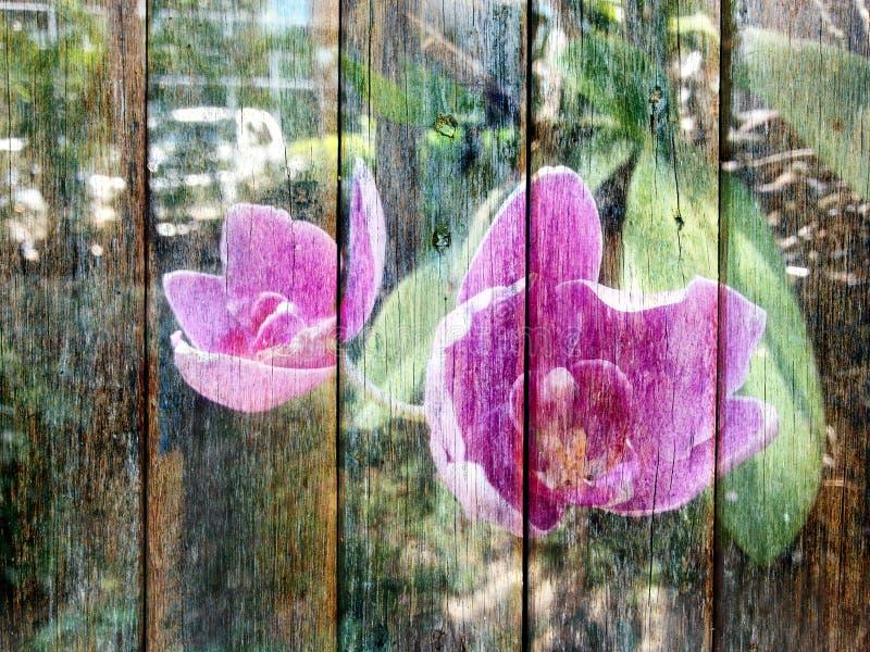 Orchideebloem op Houten textuur royalty-vrije stock foto's