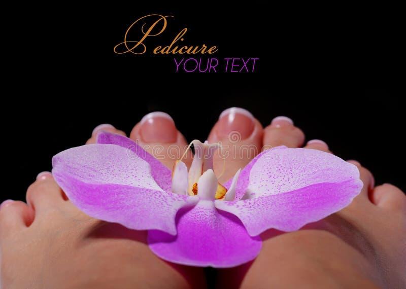 Orchideebloem op Mooie Vrouwelijke Voeten met Franse Manicure stock fotografie