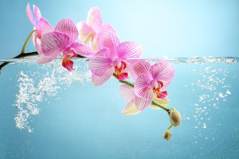 Orchideebloem in water stock fotografie