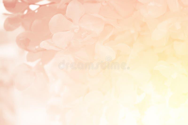 Orchideebloem in zoete zachte kleur royalty-vrije stock afbeeldingen