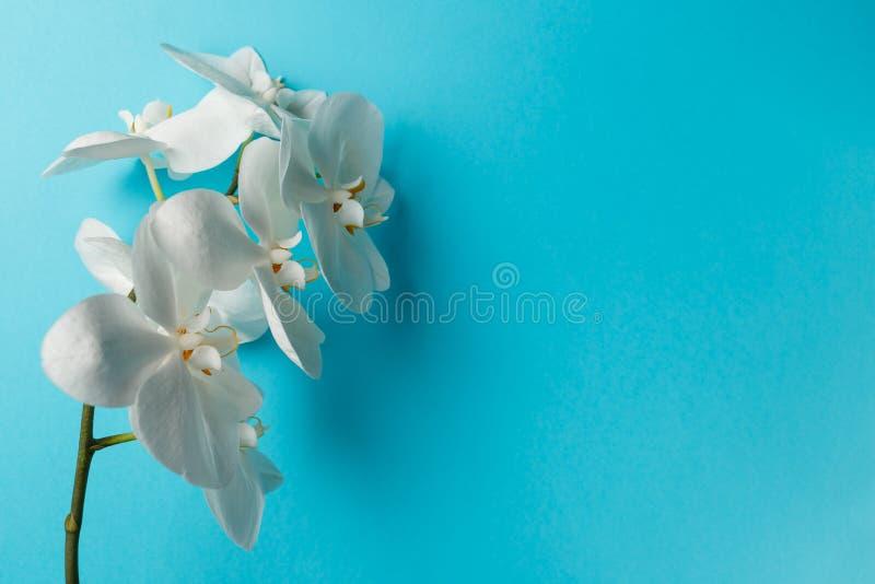 Orchideebloemen op blauwe achtergrond stock foto