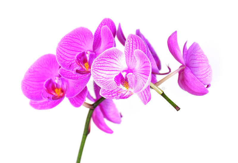Orchideeblume lizenzfreie stockfotos