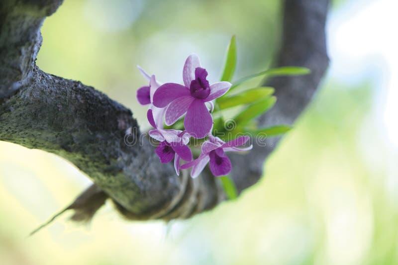Orchideeblume