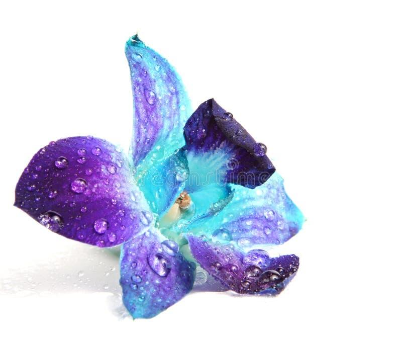 Orchideeblume lizenzfreie stockfotografie