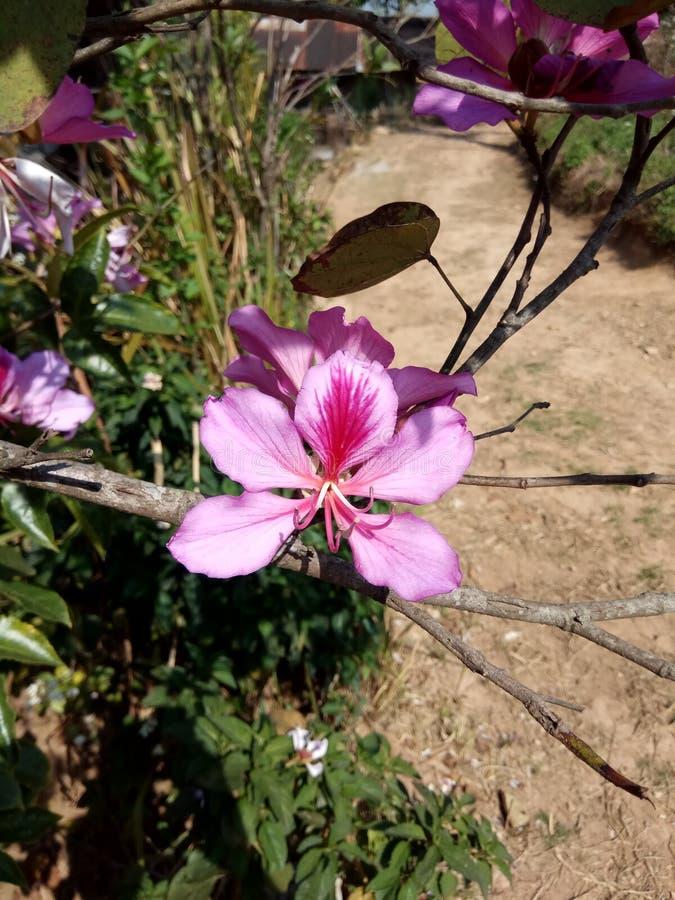 Orchideeboom royalty-vrije stock afbeeldingen