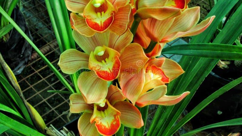 Orchideehuis royalty-vrije stock fotografie
