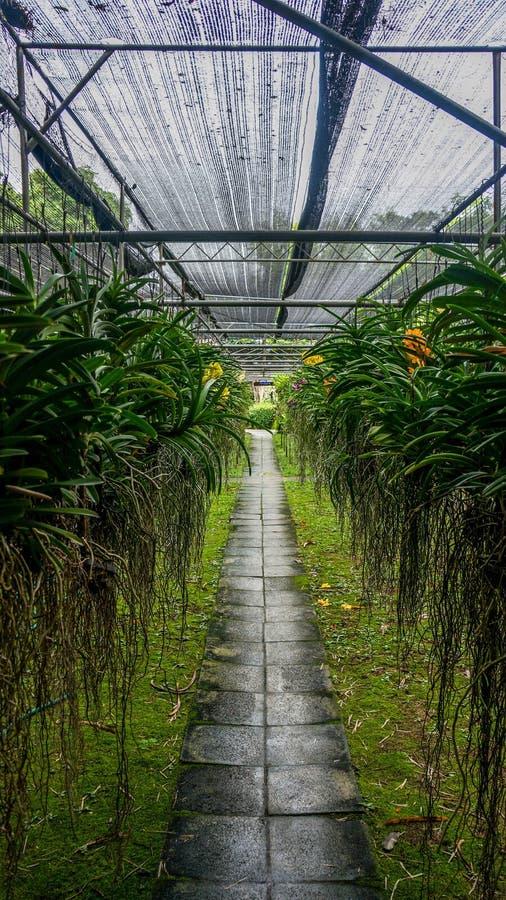Orchideelandbouwbedrijf Thailand stock foto