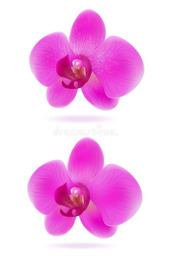 Orchideen stock abbildung