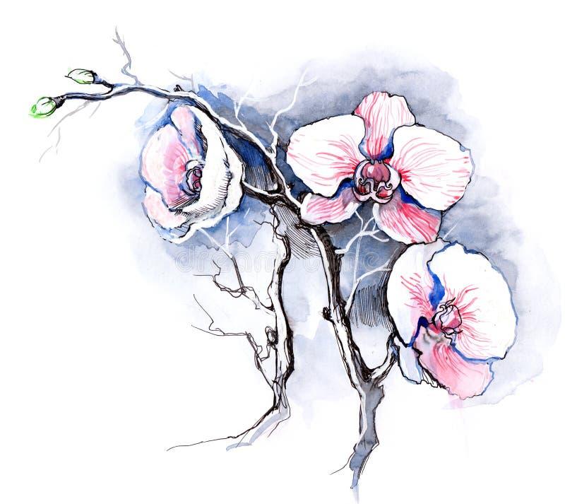 Orchideen lizenzfreie abbildung
