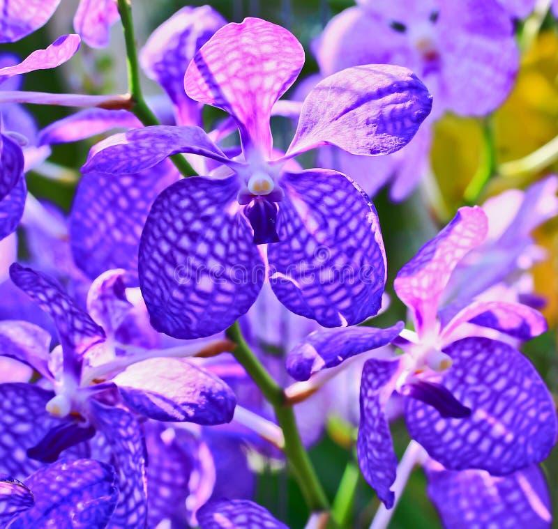Orchideen stockfotografie