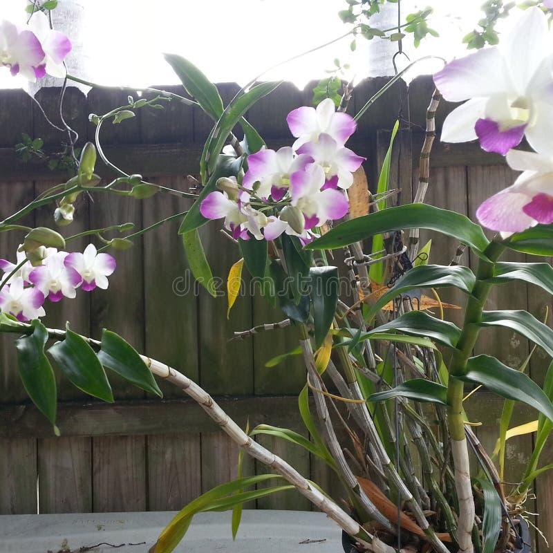 orchideen stockfotos