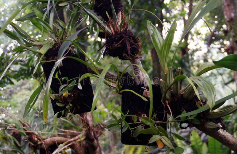 Orchideen-Anlagen lizenzfreie stockbilder