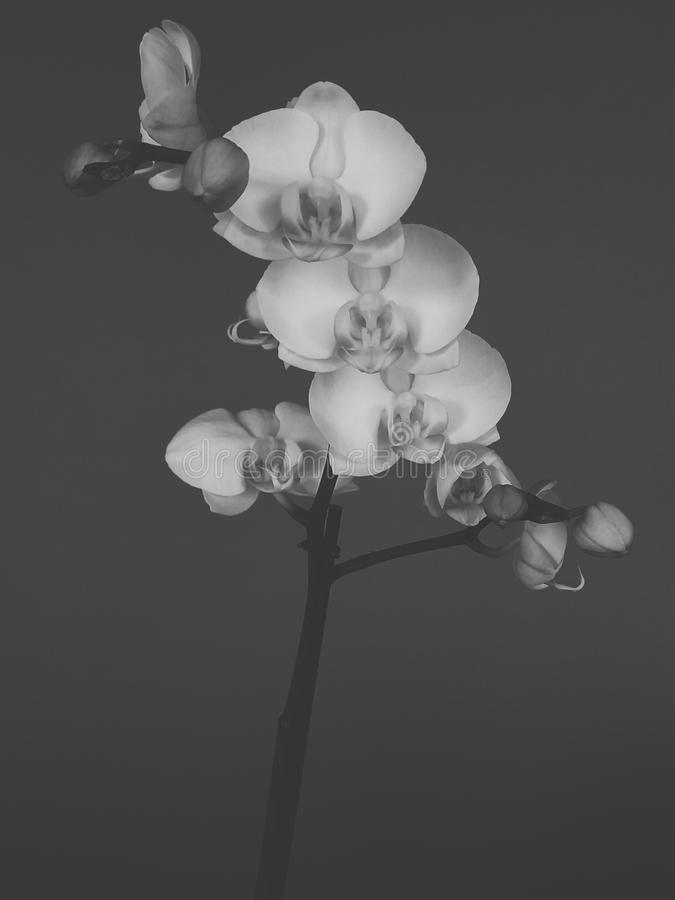 Orchideen in der Dunkelheit stockbilder